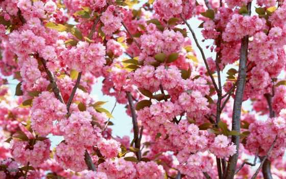 цветы, самые, красивые,