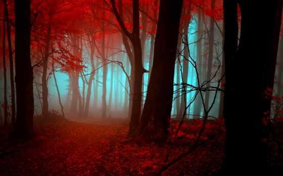 осень, лес, mystic, free,