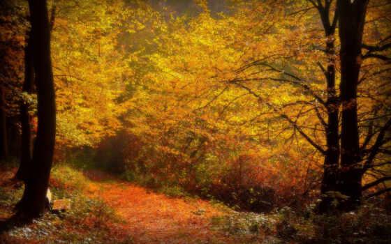 осень, лес, пасть, new, clinton, природа, forests, аллея,
