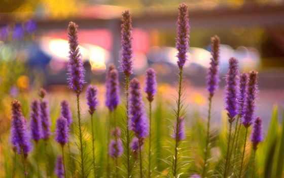 макро, цветы, desktop, поля, sermons, bruce, ware, закат,