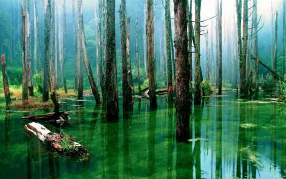 лес, trees, воде, коллекциях, яndex, card, коллекции, collections, коллекция,