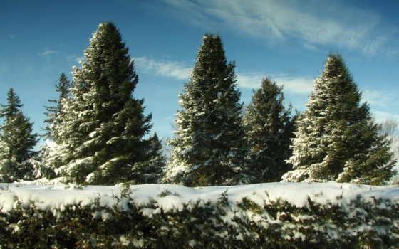 елки, снег