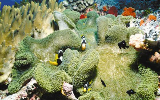 море рыбки кораллы