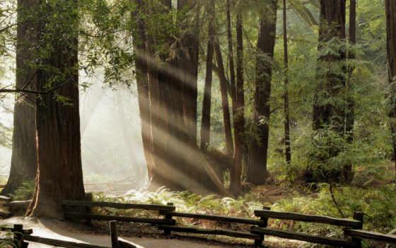 лес, дорога Фон № 4567 разрешение 1920x1080