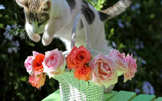 cats, flowers, красивые