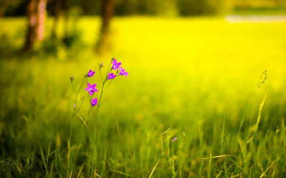 цветы, зарегистрируйтесь, contact