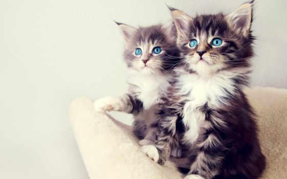 cats, котята, cute