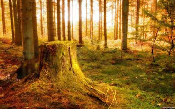 лес, осень, stump, лучи,