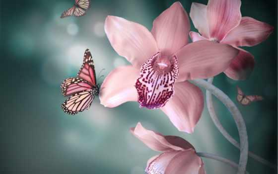 цветы, орхидея, розовые, бабочки, бутоны, лепестки,