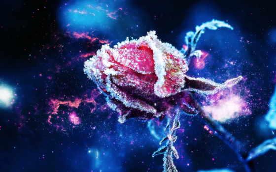 роза, цветы, фестиваля, иней, красная, парфюмерии, indie, снег, бутон,