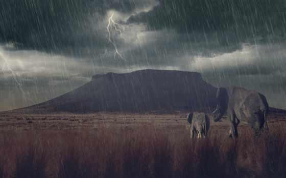 луг, буря, mountains, слон, animals, best,