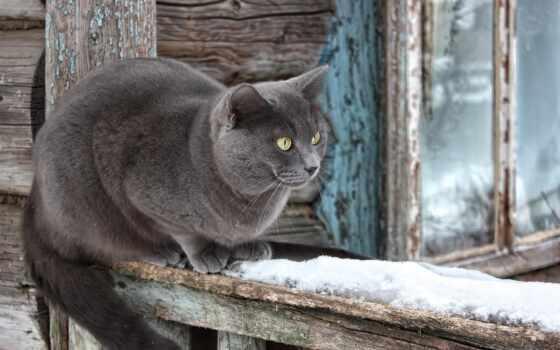 кот, house, крыльцо, дымчатый, еда, огонь, recall, окно, серый