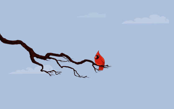 bird, ветка