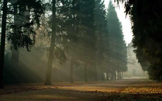 природа, trees, дерево, деревьями, дорога, листвой, landscape, сквозь, different,