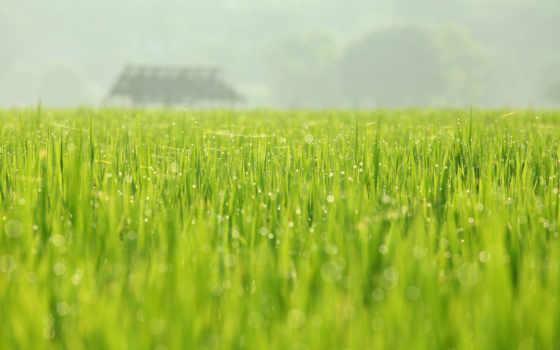 природа, май, весна
