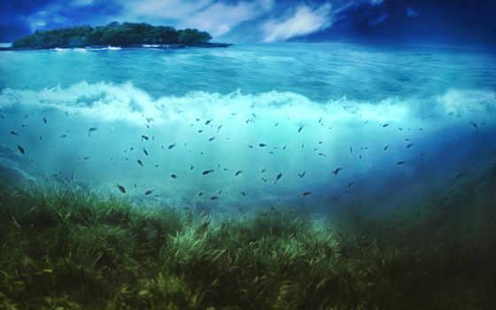 underwater, world, море
