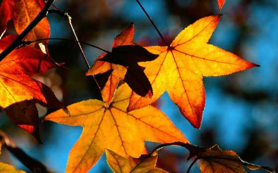 leaf, пасть, категория