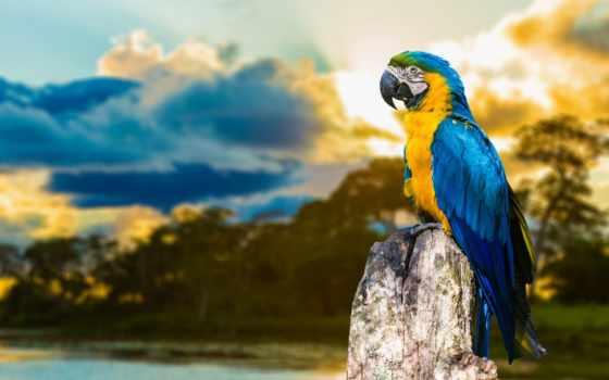 попугаи, попугай, zhivotnye, птица, branch, красивые,