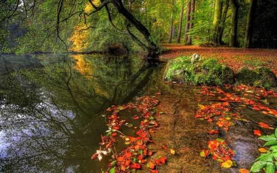 осень, листва, trees, пруд, табличка, park, природа, possible,