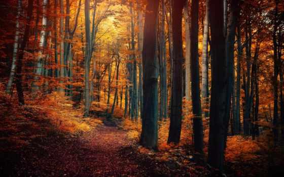 fondos, pantalla, bosque, rboles, amarillo, otoño, bosques, descargar, gratis, hojas, del,