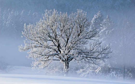 winter, дерево, снег, природа, trees, wood, blizzard, красивые, зимой,