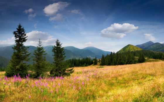 cvety, горы, trees, елки, трава, eli, поле, склон, небо, природа,