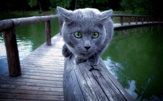 кот, перила, река, sit, испуг,