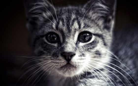 кошки, свет, zhivotnye, взгляд, морда, картинка, кот, смотреть,