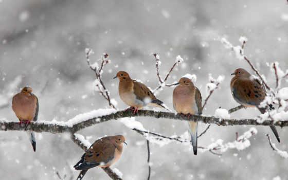дневник, природа, dove