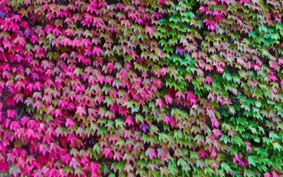 фон, цвета, ivy, картинка, desktop, pattern, текстура,