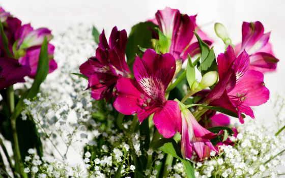 цветы, красавица, букет