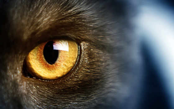 глаз, кот