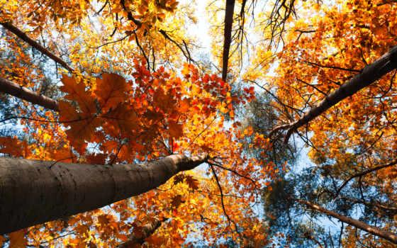 осень, природа, осенние, trees, страница, листва,