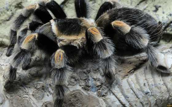 pendulum, tarantula, facebook,