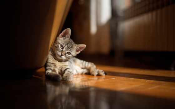 кот, дружба, everything