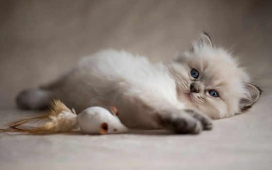 gettyimageskorea, котенок, кот