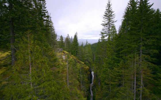 лес, речка Фон № 12616 разрешение 1920x1200