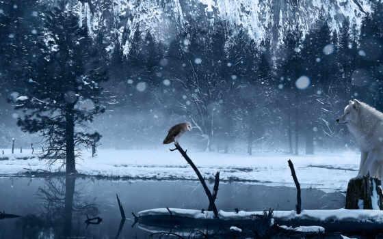 сова, озеро