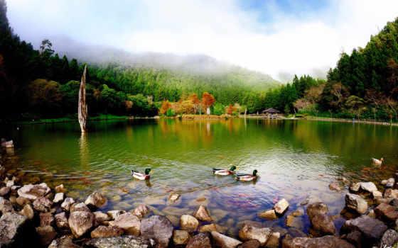 озеро, утки, природа, пруд, скалы, флот,