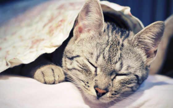 коты, кот, кошки Фон № 73168 разрешение 2560x1440