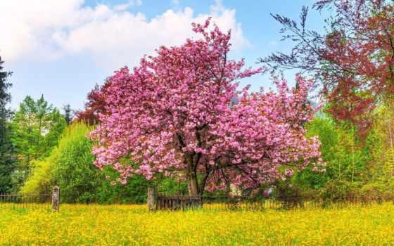 весна, заставки, elena