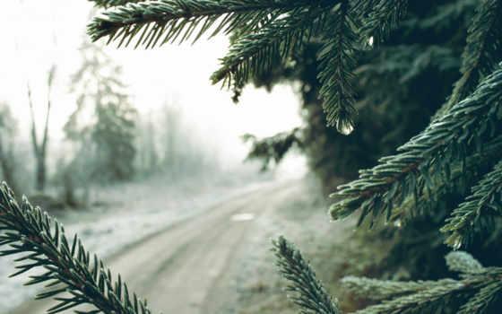 pine, winter, ветки, иглы, drop, дорога, янв, erutan,