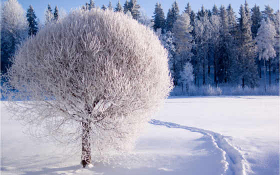 winter, природа, снег