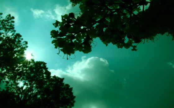 дек, листва, небо, деревьев, rays, листочки, макушки, зеленые, солнца, пробиваются, сквозь,