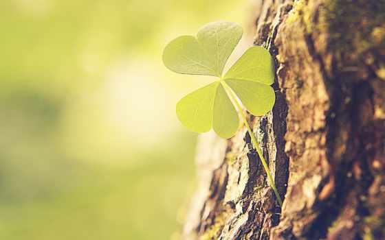 природа, картинка, instagram, валентина, листва, макро, clover, фокс, красавица, об,