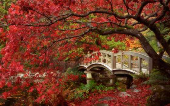 осень, года, time