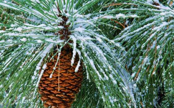 winter, красивые