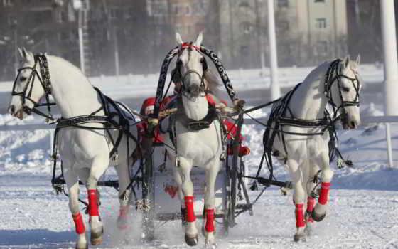 три, лошадей, лошади
