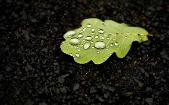 лист, макро, капли, роса, water, дуб, природа, зелёный,