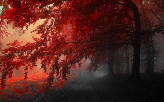 таинственная, лес, природа, загадочная, alcatel, marchut, осень, shume, het,